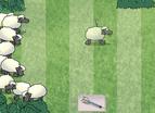 Sheepshooting